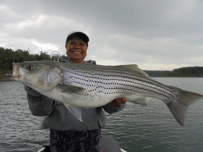 Fishing report blackburns resort lake norfork for Lake norfork fishing report