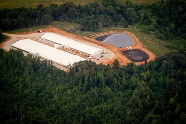 C & H hog farm sues state.