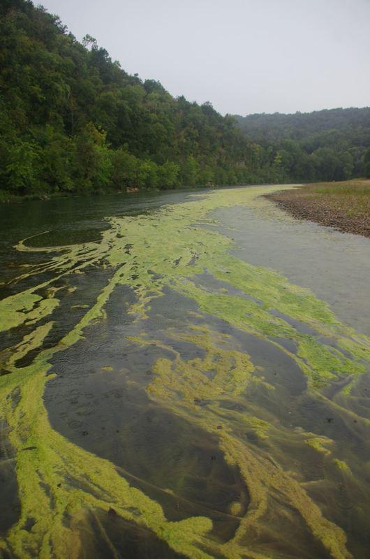 Volunteers Continue to Survey Arkansas Waterway