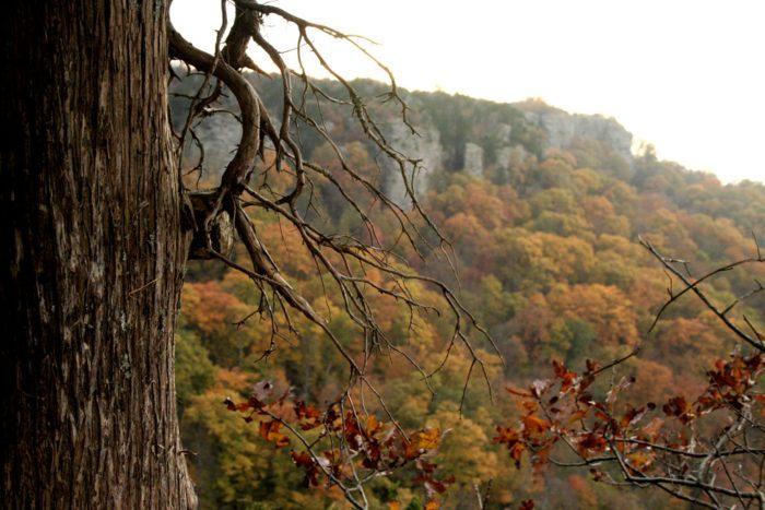 Scenic Arkansas Fall Foliage - #DFRV