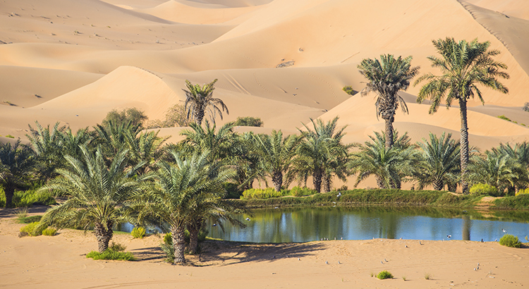 Your House Could Be the Oasis in The Inventory Desert
